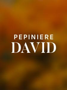 Logo pépinière DAVID
